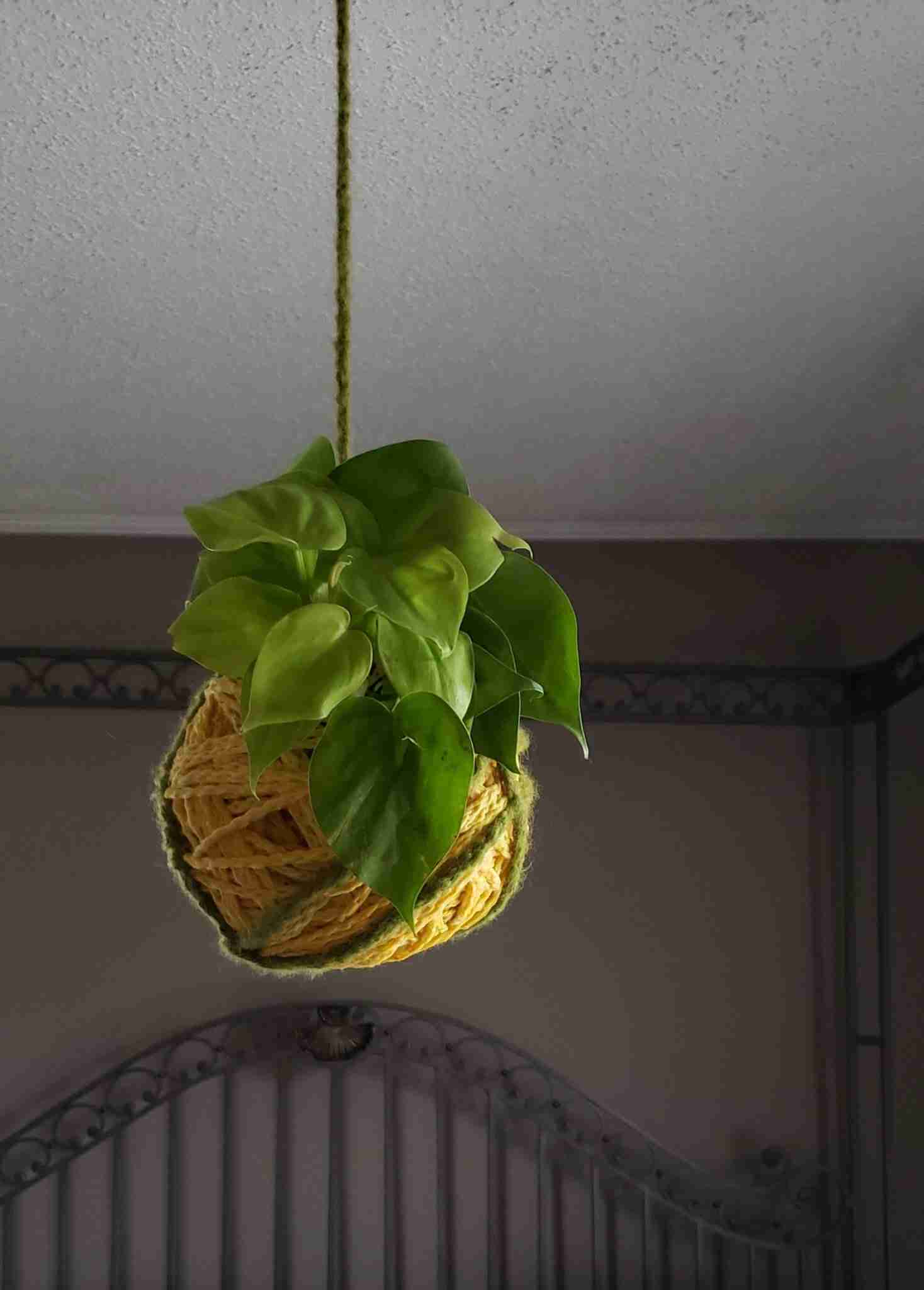 Watering a kokedama is a simple process that should be done at least once weekly for most plants, but to be sure, you can test the weight of your kokedama moss ball to see if it is light (dry) or still a bit hefty (wet and not need of watering.)